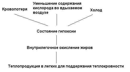 Схема легочного термогенеза по К.С. Тринчеру (1991)